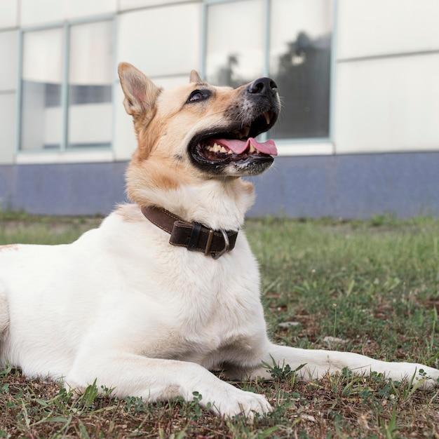見上げる草の上のスマイリー犬 Premium写真