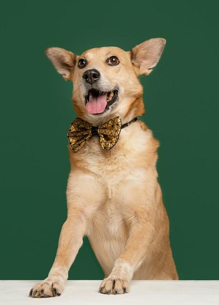 Смайлик собака носить галстук-бабочку с зеленым фоном Premium Фотографии