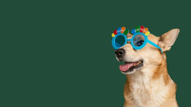 Смайлик собака в милых очках Бесплатные Фотографии