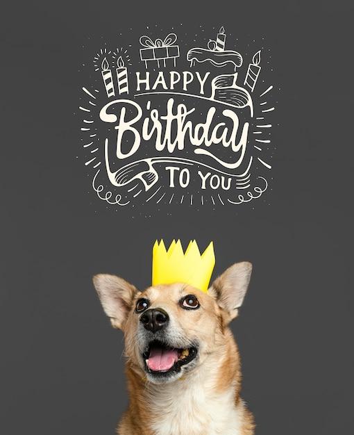 Смайлик собака в бумажной короне Бесплатные Фотографии