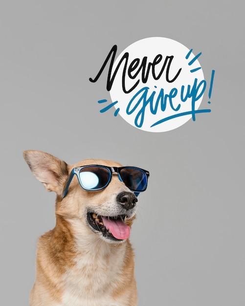 선글라스를 쓰고 웃는 개 무료 사진