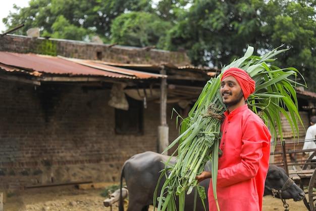 牛を養うために彼の肩に新鮮な緑の草を運ぶ笑顔のアジアの農家 Premium写真