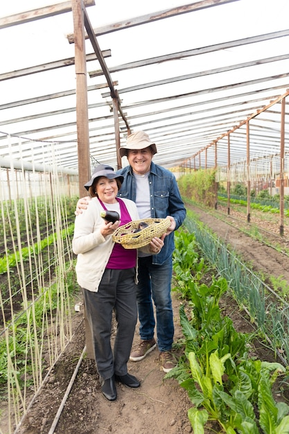 Smiling couple holding a basket with eggplants Free Photo