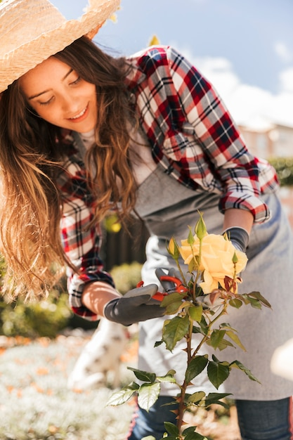 Smiling young woman wearing hat cutting the yellow rose flower with secateurs Free Photo