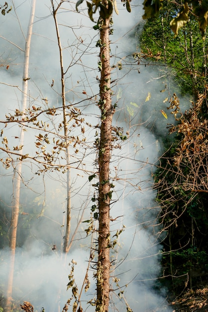 Smoke prairie fire. dry grass blazes among bushes destruction of forests Premium Photo