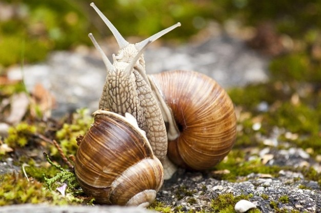 snail-nature-grass-pomatia-macro-helix-animal_121-71447