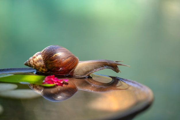 Snail in a shell crawls on a ceramic pot with water, summer day in garden Premium Photo