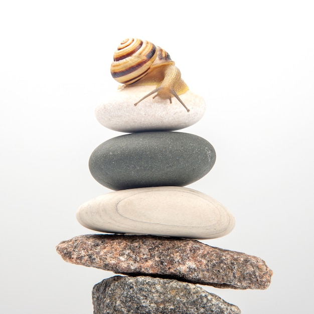 Snail on top of a stone pyramid. mollusc and invertebrate. delicacy meat and gourmet food Premium Photo