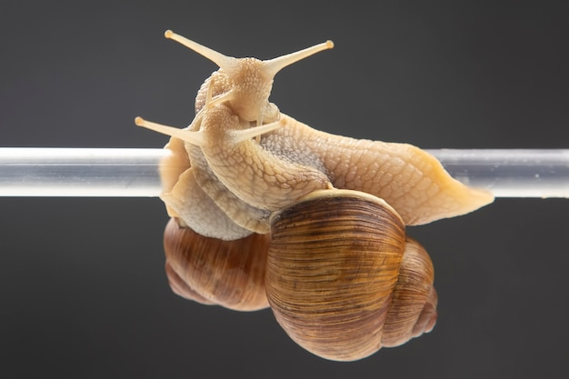 Snails hang from a plastic tube. romance and relationships in the animal kingdom Premium Photo