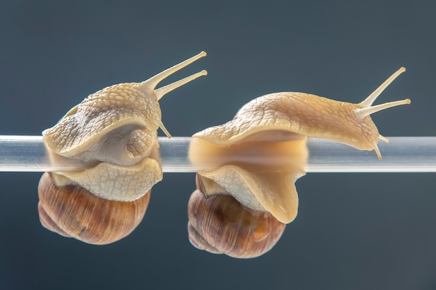 Snails hang from a plastic tube Premium Photo