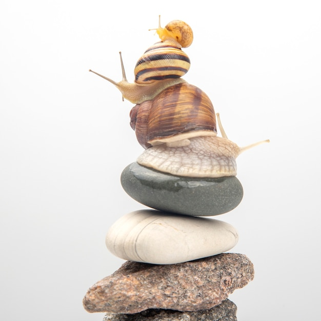 Snails on top of each other balance on top of a stone pyramid. delicacy meat and gourmet food. Premium Photo
