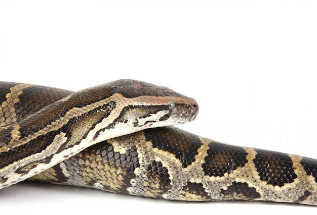 Serpente da vicino Foto Gratuite