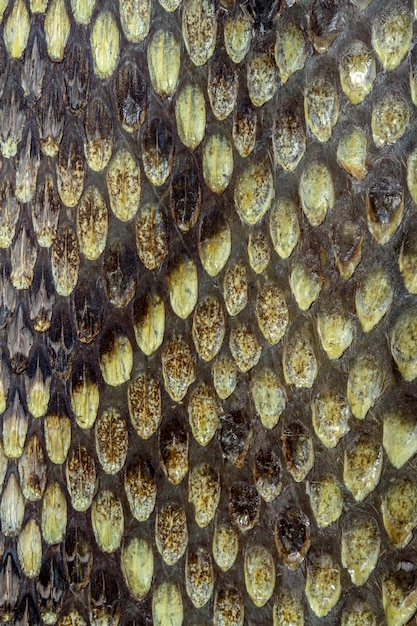 Snake skin reptile Premium Photo