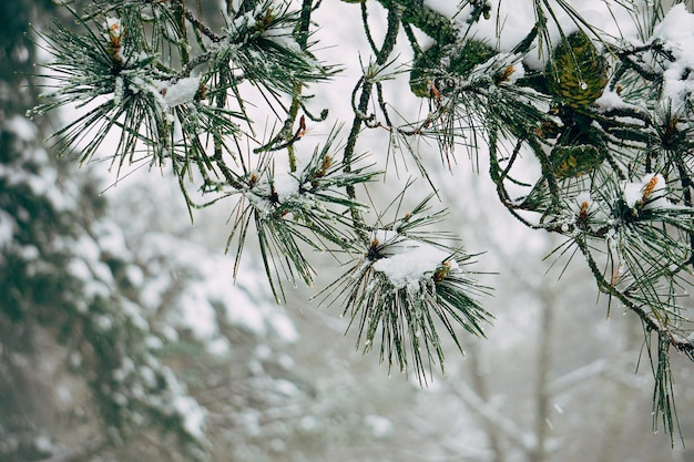 The snow and abstract tree branches in the mountain in the nature Premium Photo