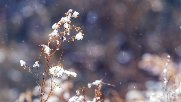 Заснеженные сухие стебли травы во время снегопада Premium Фотографии