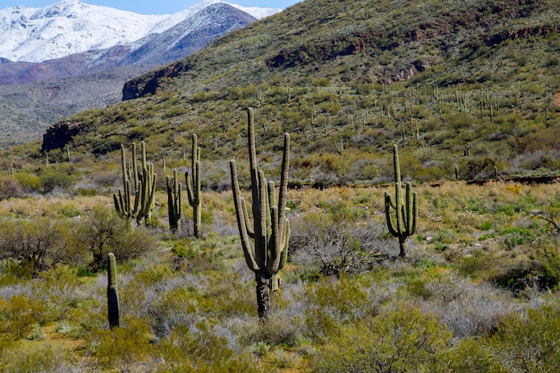 Snow covered mountains with saguaro cactus covered in snow landscape Premium Photo