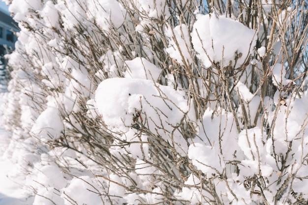 Snow covered tree Free Photo