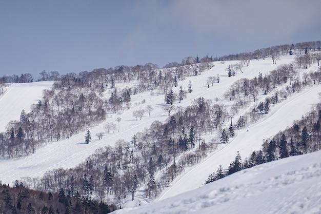Snow covered trees on winter snow mountains. Premium Photo