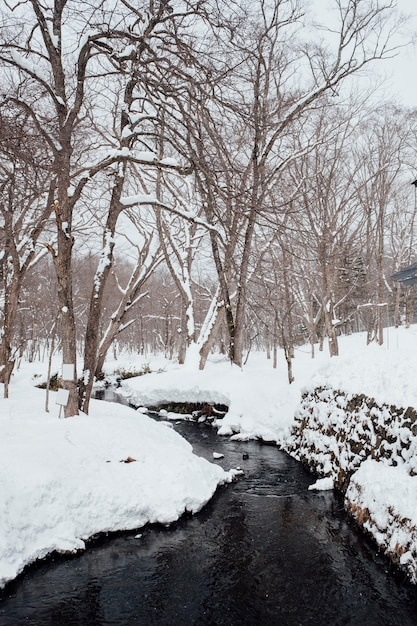 Snow forest scene at togakushi shrine, japan Free Photo