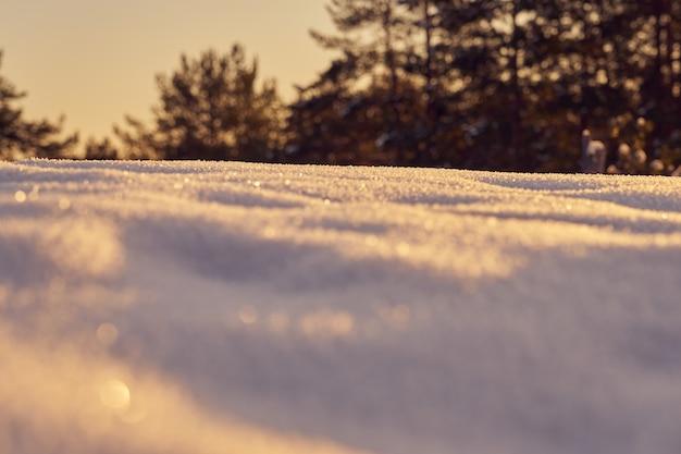 일몰 서리가 내린 겨울 저녁에 전경에 눈 프리미엄 사진