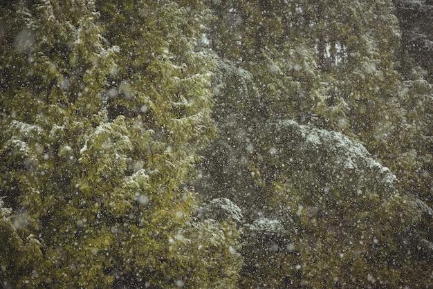녹색 숲에 눈 무료 사진