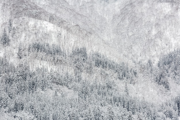 Snowfall with forest Premium Photo