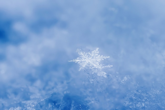 Snowflakes close-up. macro photo. the concept of winter, cold. copy space. Premium Photo
