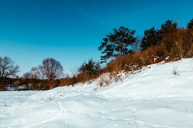 Snowy landscape with footprints and trees against blue sky Free Photo