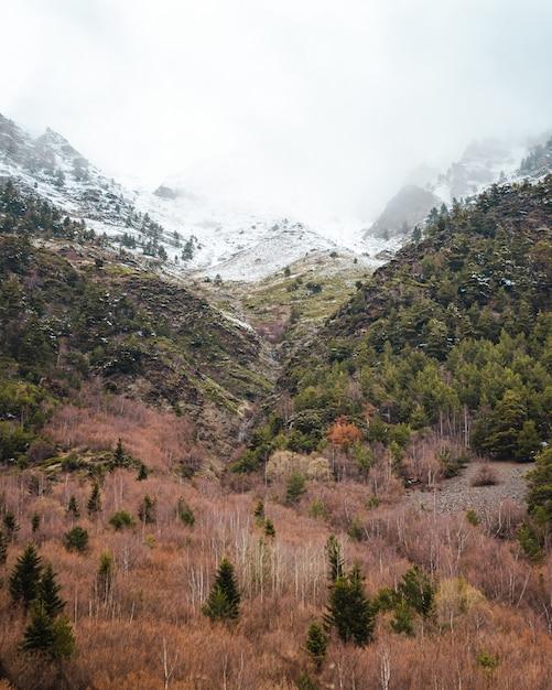 Montagne innevate e foresta colorata in una giornata nuvolosa Foto Gratuite