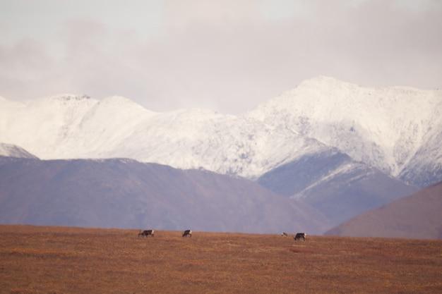 北極圏国立公園の門の雪山 無料写真
