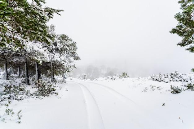 ある冬の日の山の雪道 Premium写真
