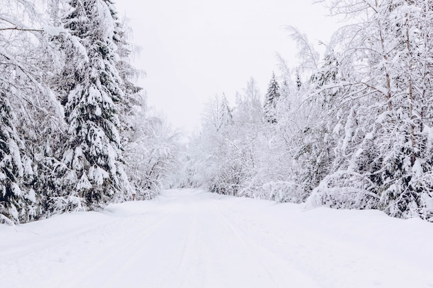Snowy road in winter forest, beautiful frosty white landscape, russia Premium Photo