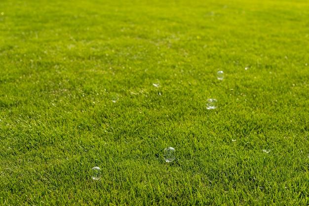 Soap bubbles in nature Free Photo