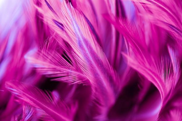 Куриные перья в стиле soft и blur для фона, абстрактное искусство Premium Фотографии