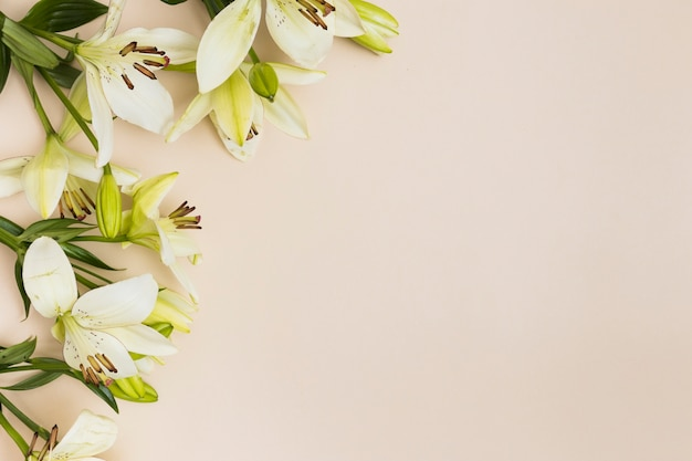 Soft lilies on beige background Free Photo