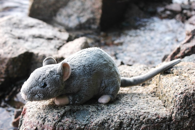 Мягкая игрушка серая крыса на камнях Premium Фотографии