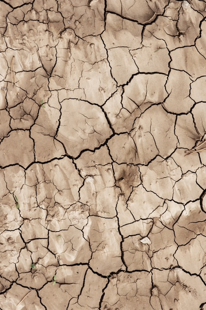The soil surface is dry and cracked Premium Photo