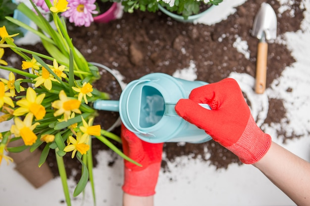 Soil, watering can, human hands in red rubber gloves watering flowers Premium Photo