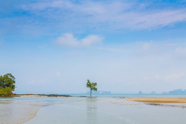 Solitary tree by the sea Free Photo
