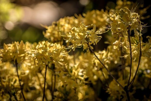 晴れた日に庭で撮った美しい黄色い花 無料写真