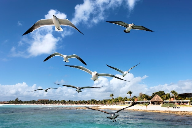 Somes seagulls flying in blue sky in mexico Free Photo