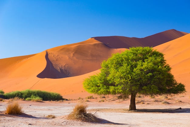 Sossusvlei namibia, scenic clay salt flat with braided acacia trees and majestic sand dunes. Premium Photo