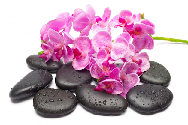 Spa stones and orchid flowers, isolated on white, Premium Photo