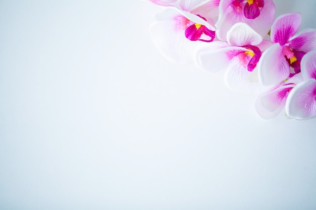 Spa and wellness scene, orchid flower on the wooden pastel Premium Photo