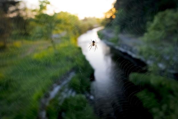 Ragno sul grande web vicino al fiume Foto Gratuite