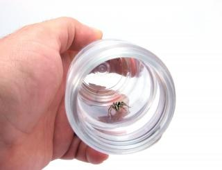 Spider in recipient Free Photo