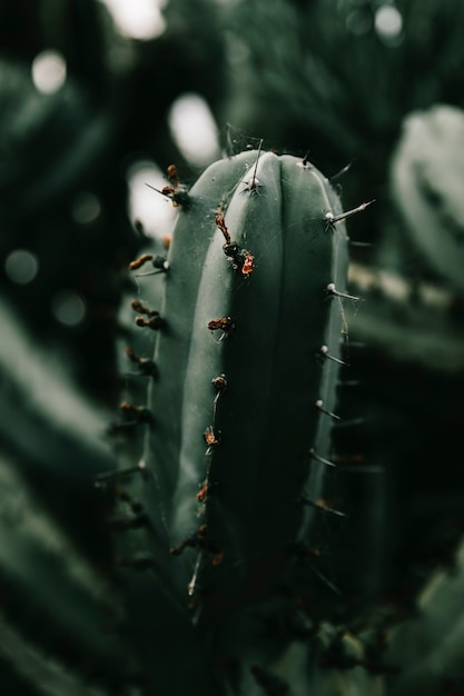Spider web on cactus plant Free Photo