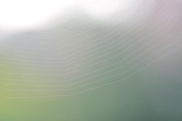 緑の自然の背景とスパイダーウェブ Premium写真