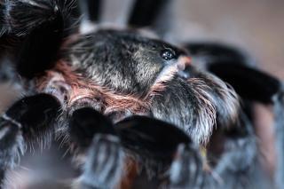 Spider  wildlife Free Photo