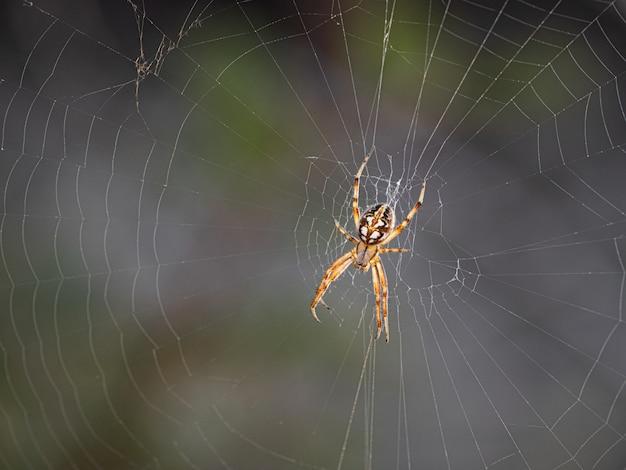 Spider Premium Photo